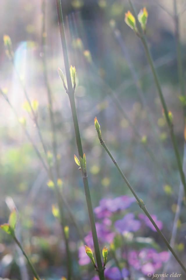 light-spring