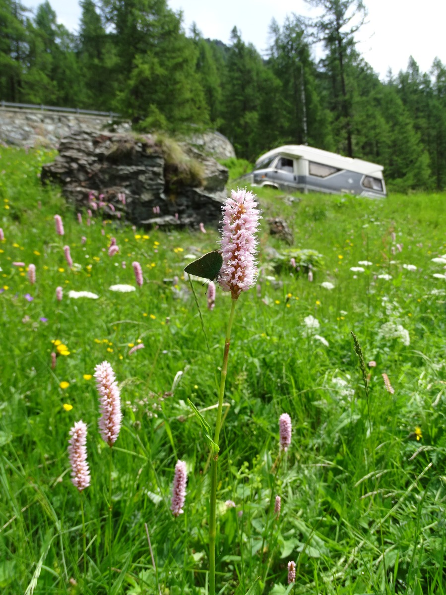 Italian Alps: Dandelions, traditional Walser people, wild nature, rain on our rooftop and Cento Cavalli